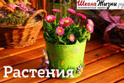 Как сохранить свежесть срезанных цветов? Секреты стойкости букетов