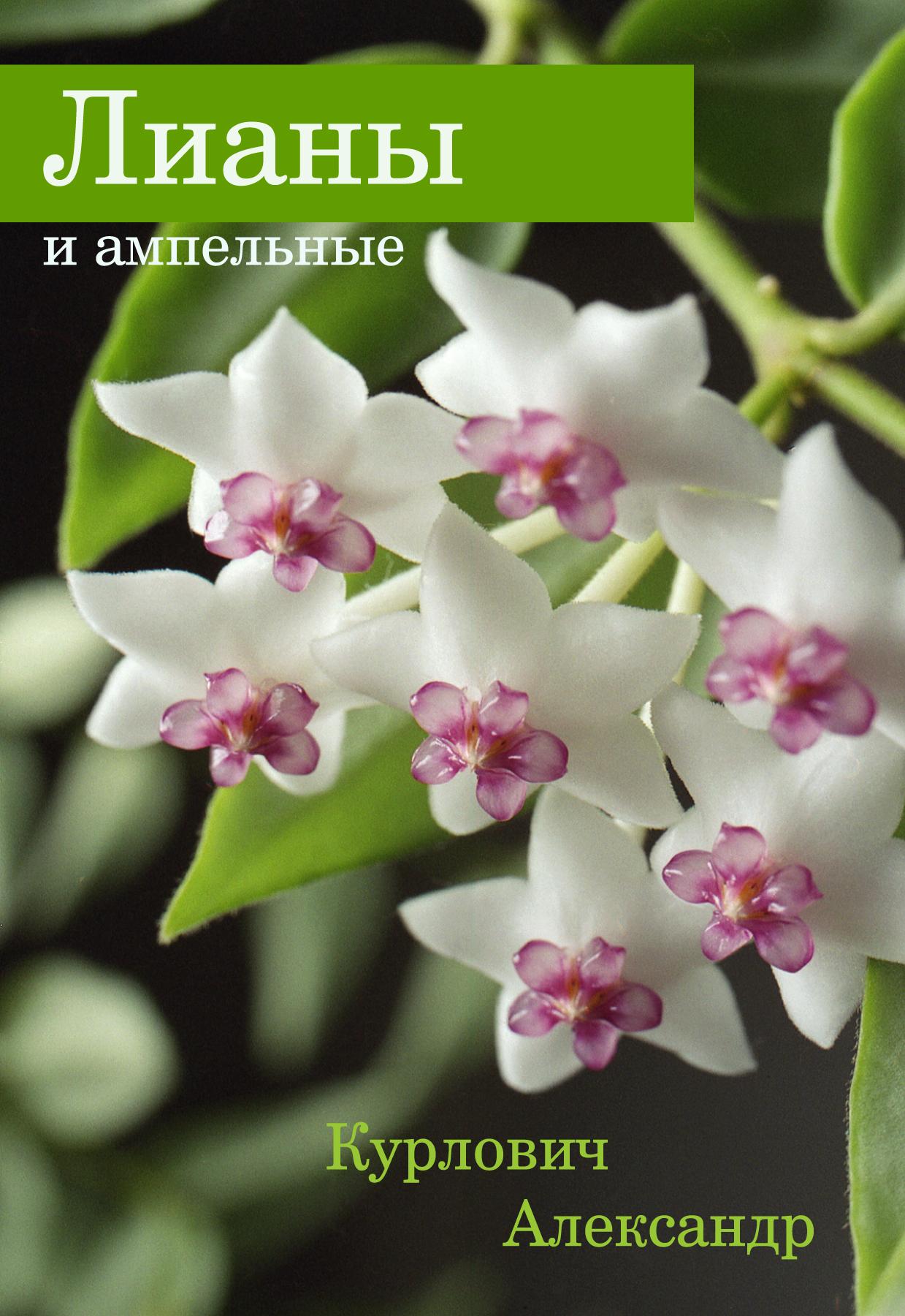 Александр Курлович Лианы и ампельные атлант мхм 2826