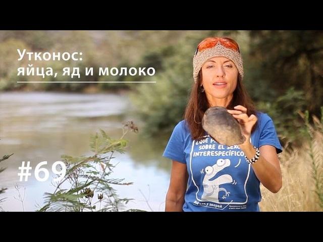 Евгения Тимонова Утконос: яйца, яд и молоко