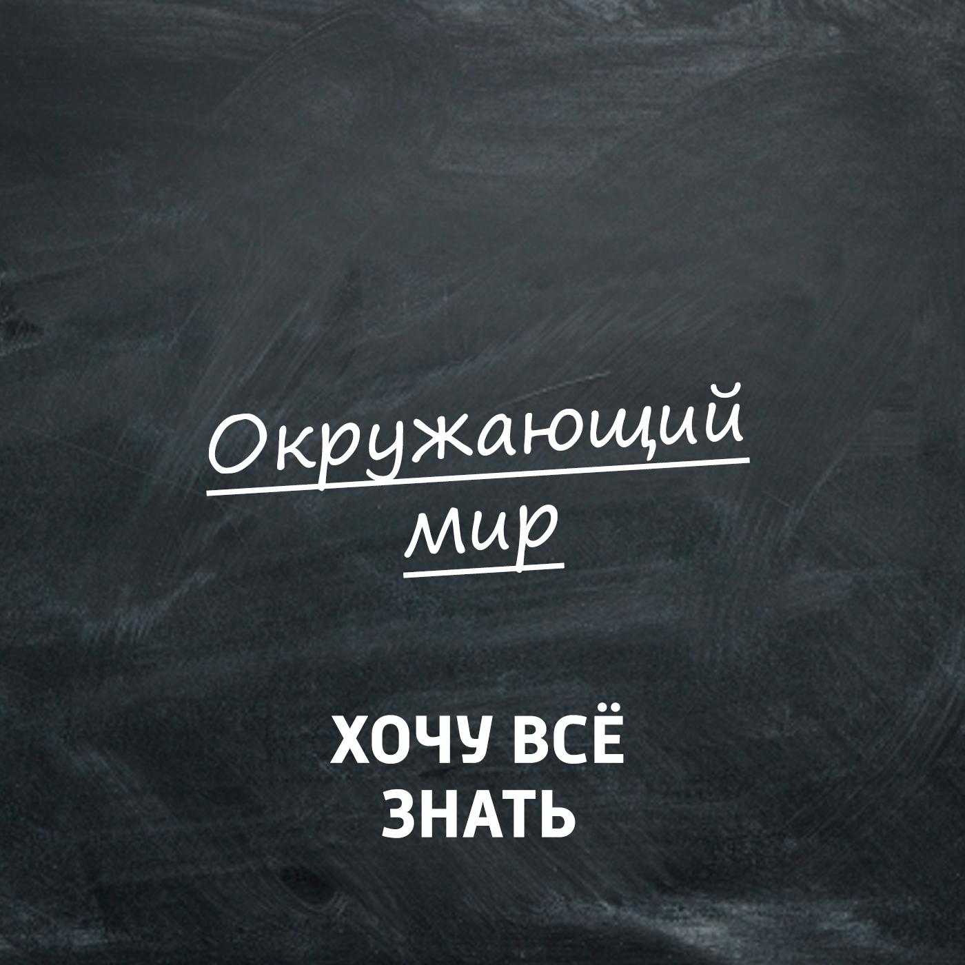 Творческий коллектив программы «Хочу всё знать» Празднуем Синичкин день