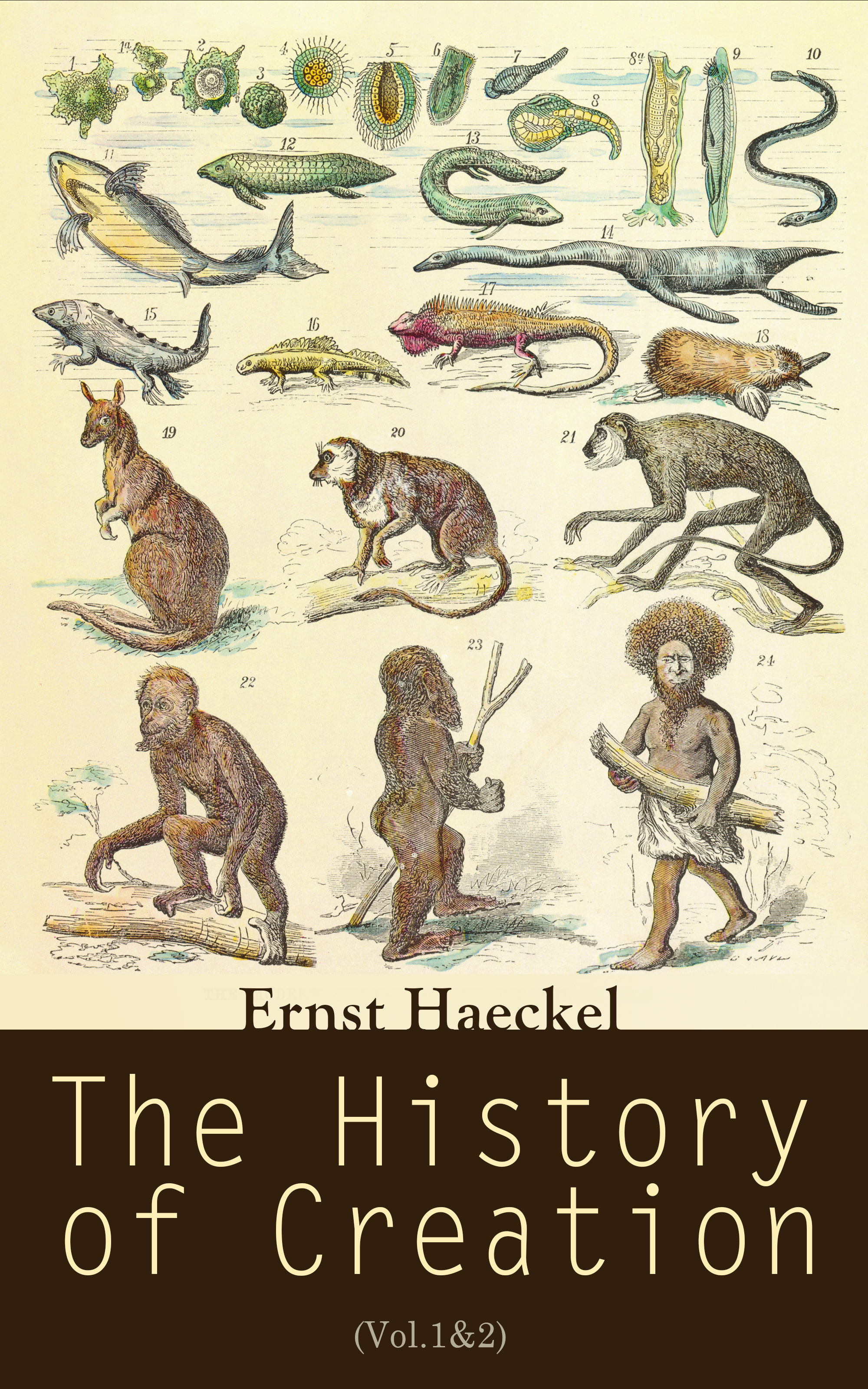 Ernst Haeckel The History of Creation (Vol.1&2)