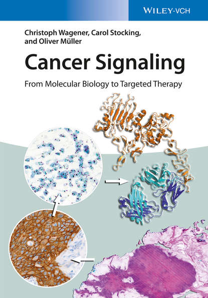 Oliver Muller Cancer Signaling, Enhanced Edition. From Molecular Biology to Targeted Therapy attempts to transfect the prion protein in human cancer cell lines