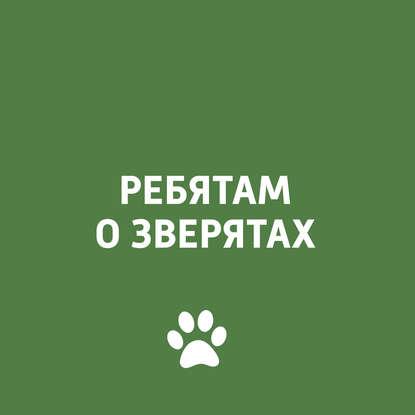 Творческий коллектив программы «Пора домой» Животные Дагестана