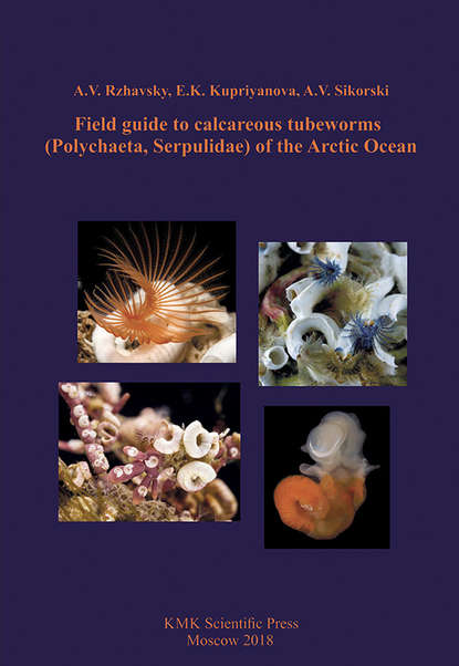 A. V. Rzhavsky Field guide to calcareous tubeworms (Polychaeta, Serpulidae) of the Arctic Ocean автомат shantou gepai автомат п с лазерным прицелом 0807 1