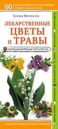 Лекарственные растения и травы. Определитель трав русских лесов и полей