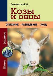 Козы и овцы