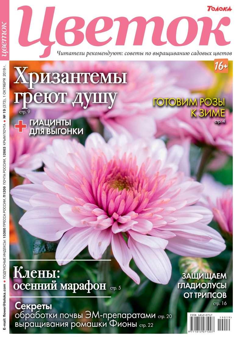 Цветок 19-2019