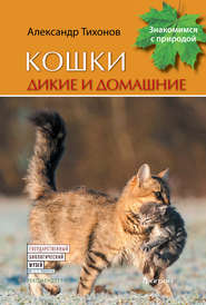 Кошки дикие и домашние